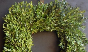 Boxwood-sq-sm500w-300x180
