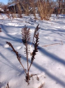 fern in white snow